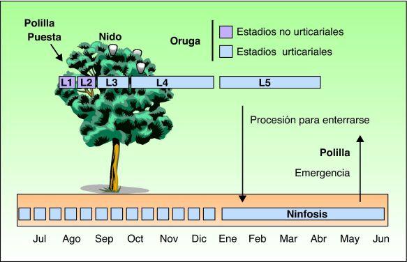 ciclo biológico.jpeg