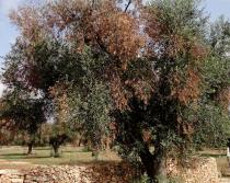 Ramas y hojas secas