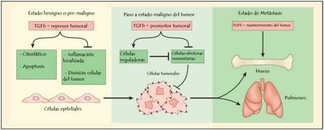 TGFb y tumores