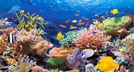 gran-barrera-de-coral-austra-0316.jpg