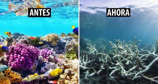 Gran-Barrera-de-Coral-en-Australia-22fuera-de-peligro223-1024x546.jpg
